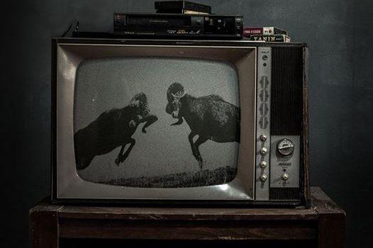 پوستر فیلم کوتاه حیوان به کارگردانی بهمن و بهرام ارک