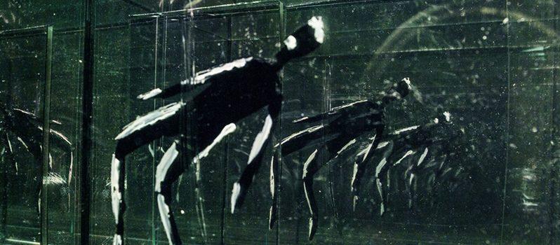 انیمیشن مستند دِیزَنگرو به کارگردانی احسان غریب
